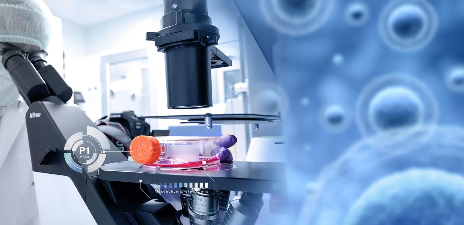 stem cell therapy, stem cell treatment, stemcells21, stemcells, bangkok stem cells,
